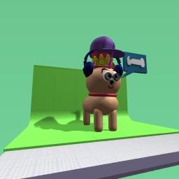 weird dog