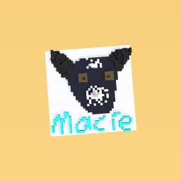 Macie my dog
