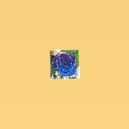 Galaxy rose <3