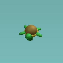 timid turtle