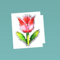 A tulip!