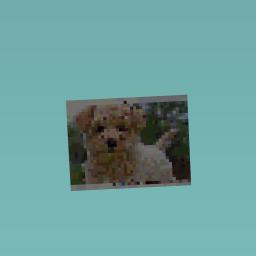 Puppy cute?
