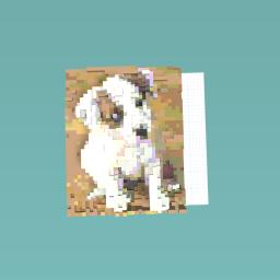 Jack rusell pup