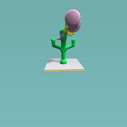 Crazy cactis