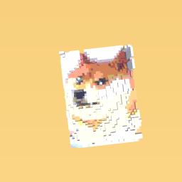 A DOGE!