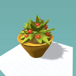 My beautiful plant!!!!!