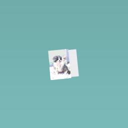 A really cute kitten