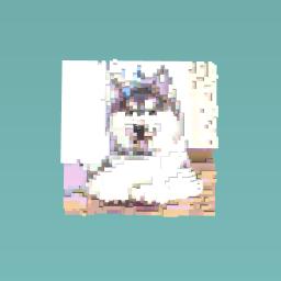 Husker puppy