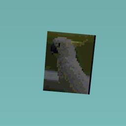 Aussie birds #2