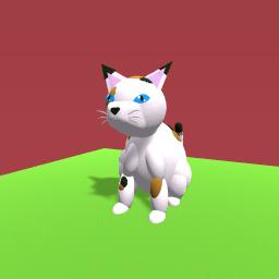 Cat :D